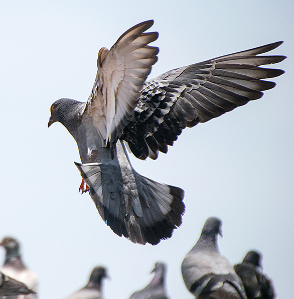 pigeon-proofing-services